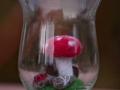 Glückspilze im Glas