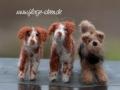 Münsterländer und Welsh Terrier